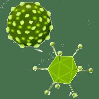 Virus e Batteri
