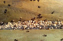 Allontana insetti infestanti